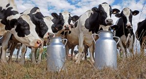 Si eres productor de leche, no lo pienses más y ¡certifícate!