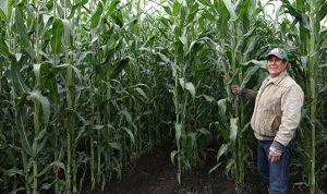 CIMMYT y Agricultura juntas para transitar hacia una agricultura de conservación