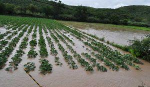 Agricultura respalda al campo mexicano ante desastres naturales