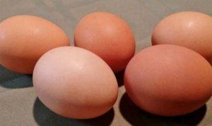 Falso, que huevo causa colesterol: Experto