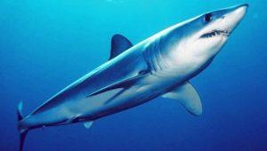 Lagartos y tiburones en nueva lista de animales protegidos en Cuba