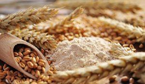 Reconversión de cultivos de maíz a trigo panificable