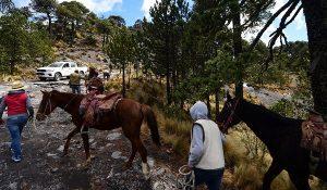 Bajas temperaturas traen ingresos para habitantes del Cofre de Perote