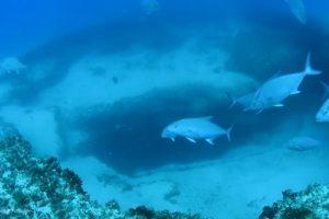 Encuentran cenotes de agua dulce en el fondo del Mar Caribe