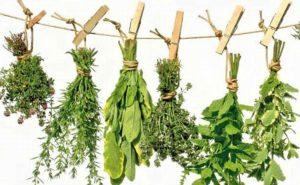Estudian plantas medicinales para proteger mucosa gástrica