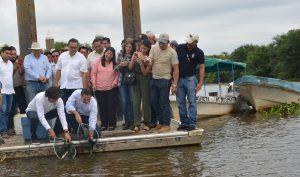 Coadyuva la UJAT en repoblación de especies marinas en los Pantanos de Centla