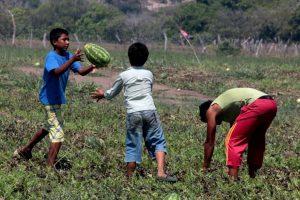 Acusan productores en Veracruz que no han recibido apoyo del gobierno federal ni estatal