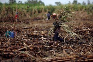 Apoyo para productores de caña de azúcar