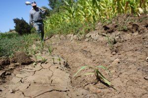 Sequía impacta 400 municipios de México