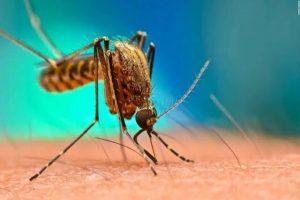 Tabasco es primer lugar nacional en muertes por dengue