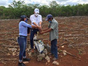 Comienza en Yucatán la distribución de semillas de maíz e insumos para impulsar al campo