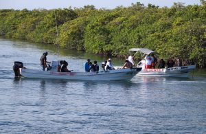 Gobierno municipal contribuye a cuidado de manglares en Benito Juárez