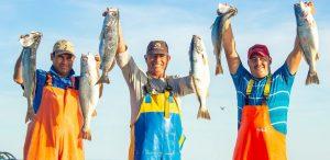 Cooperativas pesqueras: un modelo que aporta a la seguridad alimentaria