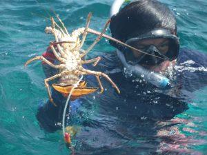 Inició temporada de pesca de langosta en Punta Herrero en Quintana Roo