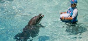 Delphinus abre todos sus parques en Quintana Roo con tarifas preferenciales
