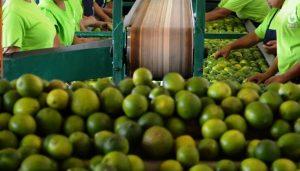 En el tema agropecuario estamos preparados para el T-MEC: Agricultura