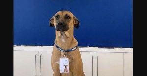 Perrito consigue empleo y casa en agencia de autos
