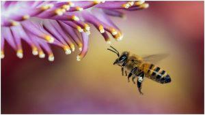 Radiación de los teléfonos celulares podría influir en muerte de insectos: Estudio
