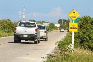 Colocan señalamientos para prevenir daños a los flamencos en Yucatán