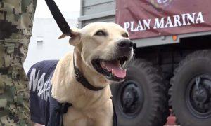Marina adopta a perrito rescatado en inundaciones de Tabasco