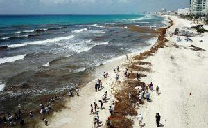 La Secretaría de Marina–Armada de México informa prospectiva sobre arribazón de sargazo a las costas del Caribe Mexicano para el 2021