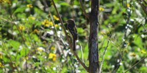 """Reserva Ecológica """"Cuxtal"""", generadora de servicios ambientales indispensables para la biodiversidad en   Yucatán"""
