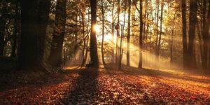 Equinoccio de otoño: ¿por qué cambia de fecha cada año?