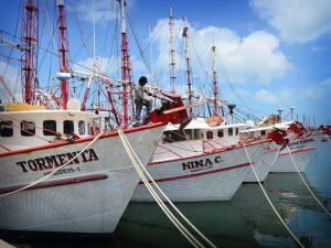 Incertidumbre en armadores sobre la temporada de camarón que inicia el miércoles en Campeche