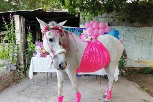 Celebran baby shower a yegua en Yucatán